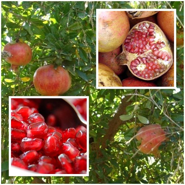 Granada un lujo de fruta a nuestro alcance