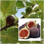 Higos – Fruta sana de otoño